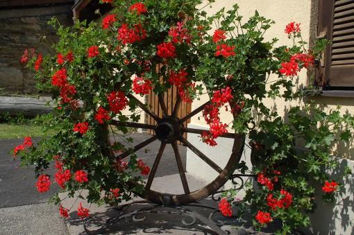 Blumenmeer der Pension Dullnig